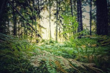Mielikin metsä